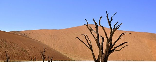Namibia: Number Portability